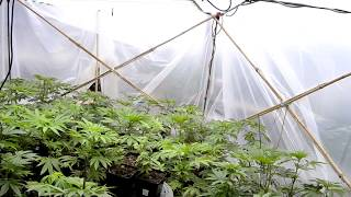 green house update by Emerald Coast 420