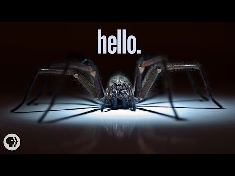 I'm - The science of… OH GOD IS THAT A SPIDER?! Subscribe to It's Okay To Be Smart: http://bit.ly/iotbs_sub ↓ More info and sources below ↓ Follow on Twitter: http://twitter.com/jtotheizzoe...