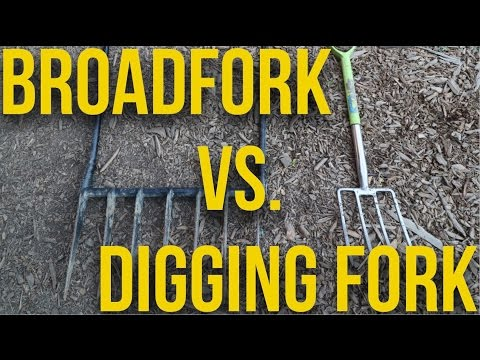 IN FOCUS - Broadfork vs Digging Fork