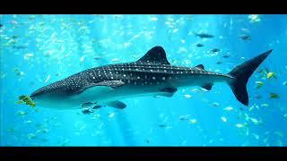 Video Miramare: Velká ryba/ The big fish (part 1, version 1)