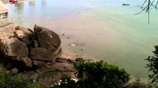 Cliff Diving Monkeys
