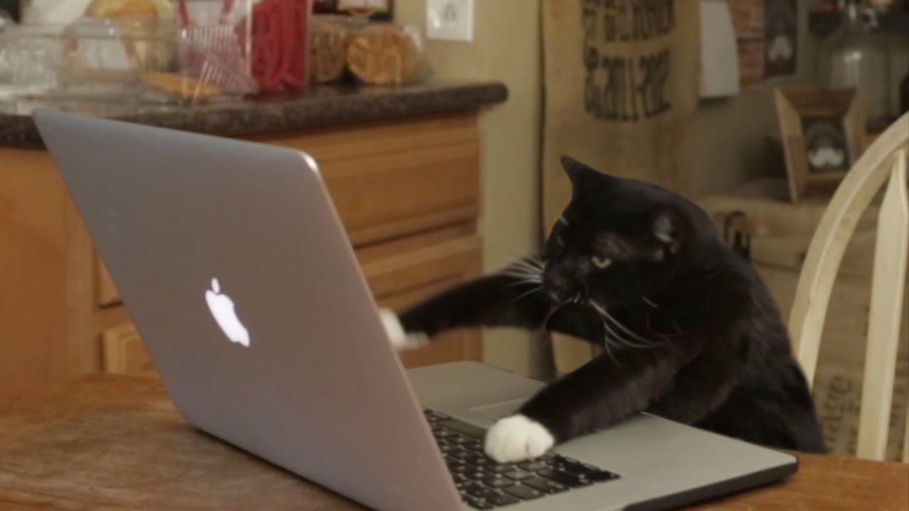 Aaron's Animals – Facebook Hacker