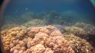 10 min. of wonderful underwater movies and photos made with the GoPro HD camera.....ENJOY