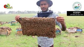 Bee keeping Techniques in bangladesh by Krishi...
