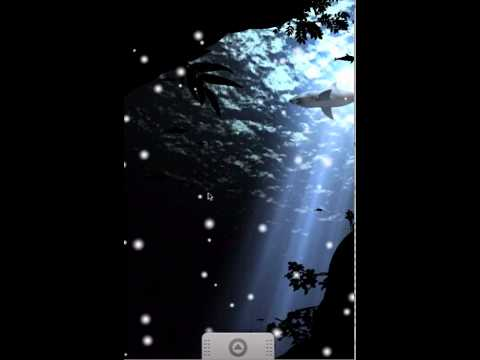 Video of Shark Live Wallpaper free