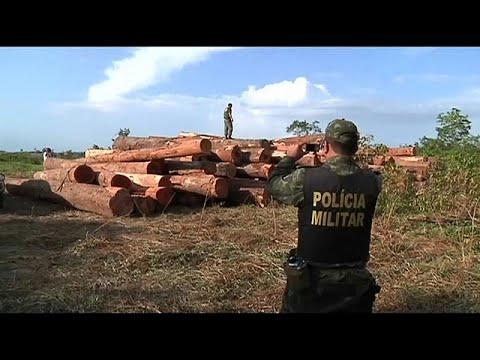 Brasilien: Der Amazonas-Regenwald schrumpft in nie dag ...