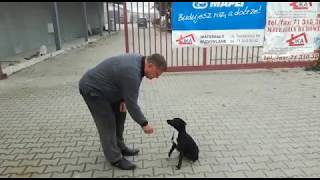 Umie liczyć, odejmować i mnożyć! Ikunia – najmądrzejszy polski pies w akcji! :D