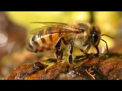 4 Reasons Pesticides Are Bad for Bees : Dealing with Bugs & Pests