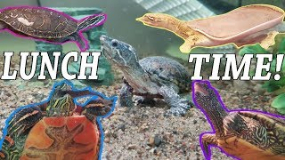 Feed My Pet Friday: Softshell, Painted, Map, and Musk Turtles! by Snake Discovery