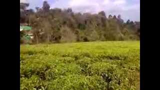 Limuru Kenya  city images : Plots of Land for Sale in Limuru Kenya in Tigoni