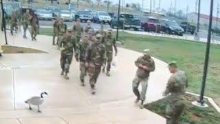 faze tari gasca intimideaza militarii