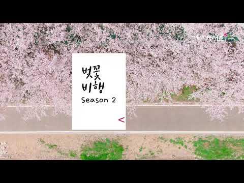 2021 봄 벚꽃🌸비행 시즌2 [feat. 드론 원스탑] | 양재천 | 여의천 | 양재시민의숲
