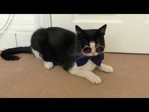 Handsome Cat Models Bow Tie & Glasses - 4K Ultra Hd 2160p (видео)