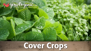 Cover Crops for the Garden