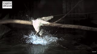 Crocodile Attack In Slow Motion - BBC Earth