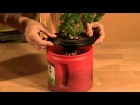Kratky Method of Hydroponics Update