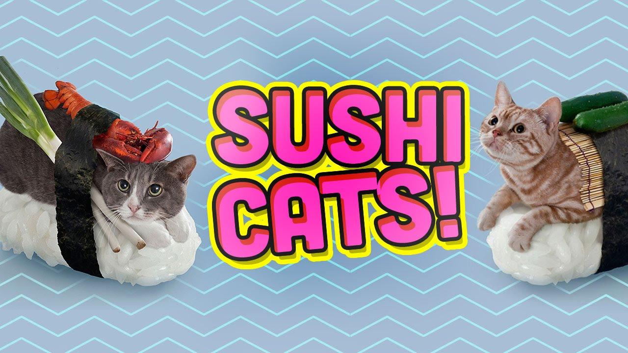 SUSHI CATS!