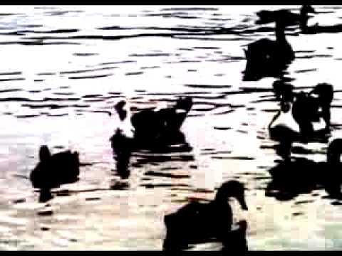 Tekst piosenki Klaxons - Isle Of Her po polsku