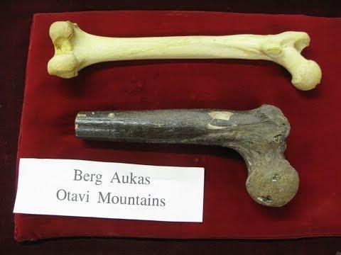 Giant Human Bone Of Johannesburg South Africa