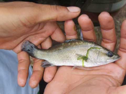 Thailand, Shrimp farm reclamation