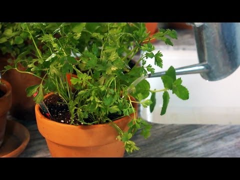 How to Grow Herbs Indoors | At Home With P. Allen Smith