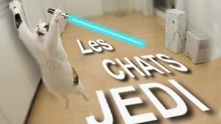 Video LES CHATS JEDI - PAROLE DE CHAT MP3, 3GP, MP4, WEBM, AVI, FLV Mei 2018