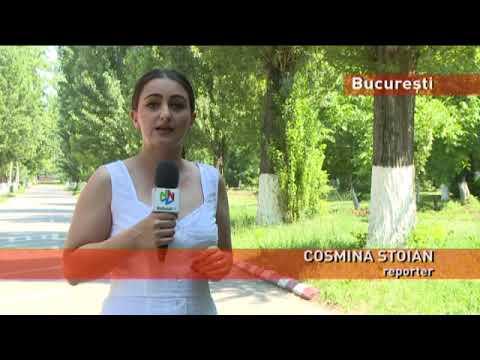 Acțiune de combatere a țânțarilor din București, de săptămâna viitoare