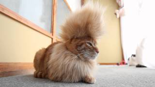Super Saiyan Kitty