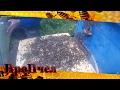 Видео - Мастер класс по объединению роев от пчеловода Сергея