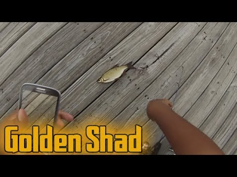 Bluegill, Crappie and Shad Fishing with Bread Ball Part 2 | Haven ᴴᴰ