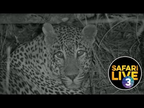 SafariLIVE On SABC 3 - Episode 1