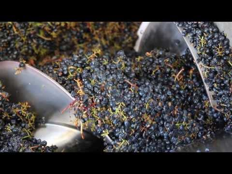 Jordan Winery 2013 Harvest Report in Alexander Valley Sonoma County