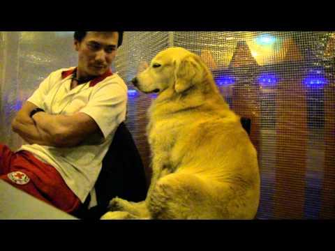 主人帶狗狗到台北的燒烤店用餐,卻無聊到狂打瞌睡!沒想到主人發現後,下一秒竟然… 快笑翻了!
