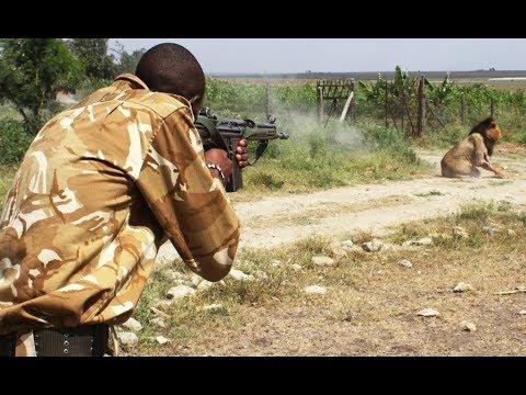Ботсвана. Львы зашли в деревню Дикая природа Африки.Сафари.Кругосветка