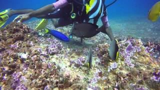 Unawatuna Sri Lanka  city pictures gallery : Diving Sri Lanka with Submarine Diving Center, Unawatuna