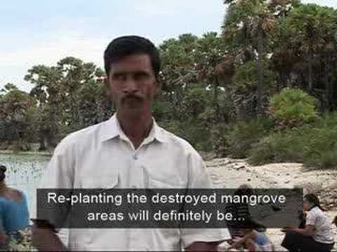 The Greenbelt Reports: Mangroves Are Forever