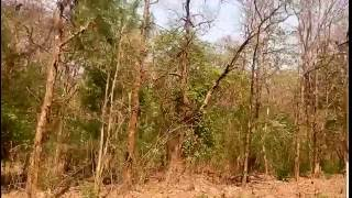 Dandeli India  city images : Karnataka Forest Travel Video | Karnataka - Dandeli - India