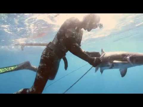Spearfishing with the SpearHeads E6 Teaser