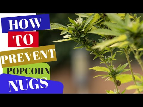 How To Prevent Popcorn Nugs!