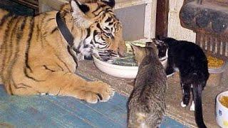 Как едят животные? / How To Eat Animals?