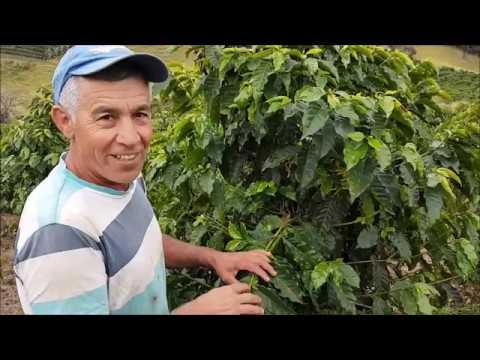 Reportagem: AgroCoffe
