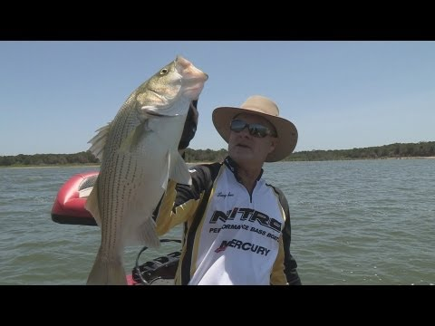 Southwest Outdoors Report #15 Cooper Lake, Texas Hybrid Striper Fishing – 2013