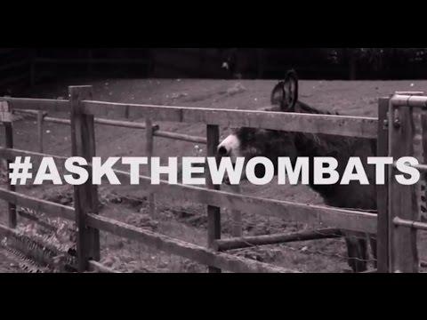 The Wombats - Twitter Q&A (#AskTheWombats)