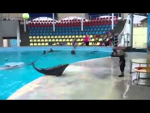 Dolphin Plays Catch With Little Boy