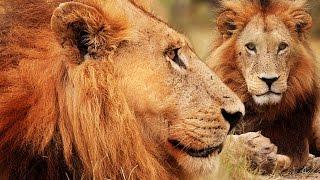 Video Botswana Lion Brotherhood - 720p NGW MP3, 3GP, MP4, WEBM, AVI, FLV Februari 2019