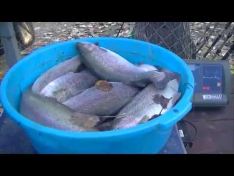 Видео отчет о рыбалке за 13 октября 2018