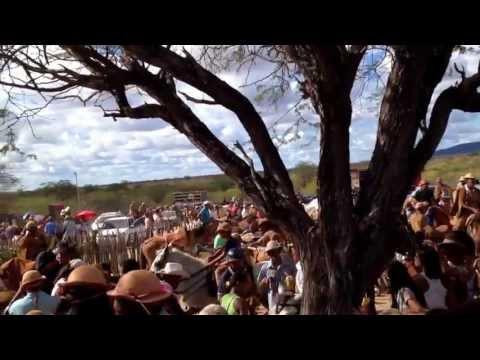 Festa do Vaqueiro em Curaça BA....