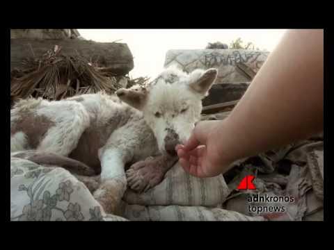 abbandonato tra i rifiuti e poi salvato, il cane trova nuova vita...