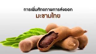 การเพิ่มศักยภาพการส่งออกมะขามไทย