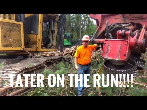 Tigercat & Waratah processor smoking trees and a tater running scared! (видео)